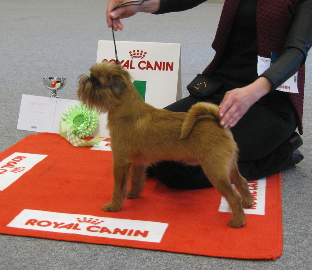 Oligarh Royal Canin Puppy Show 2016